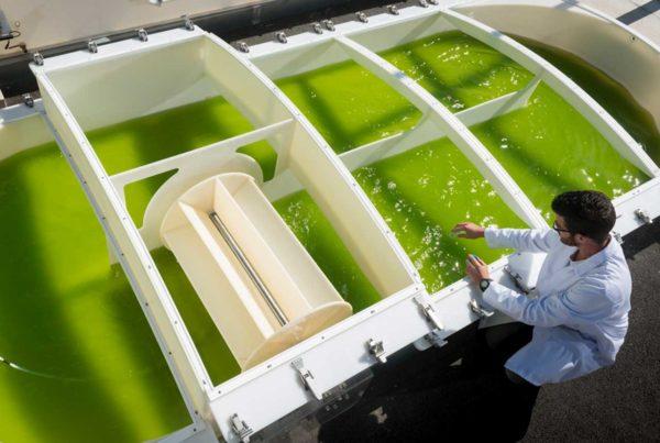 Algoculture bassin scientifique analyse