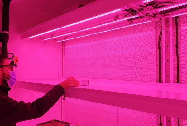 Audit éclairage chambre de culture mesure qualite lumière rose