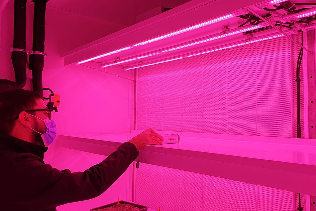 Audit éclairage chambre de culture lumière rose