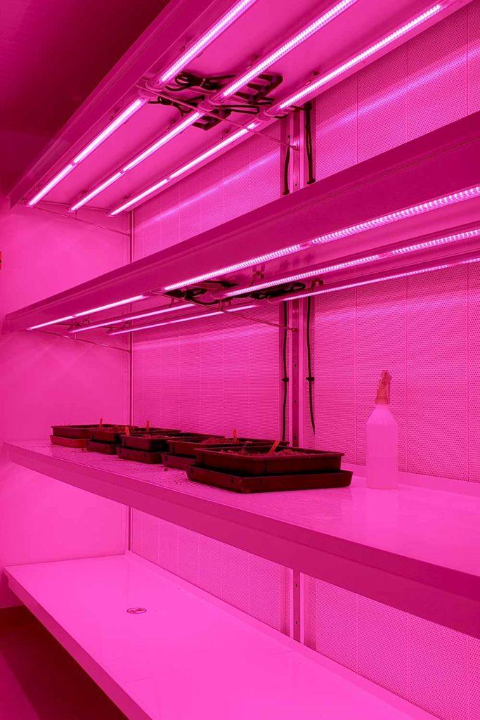 Chambre culture Racklight lumia VGD éclairage rose