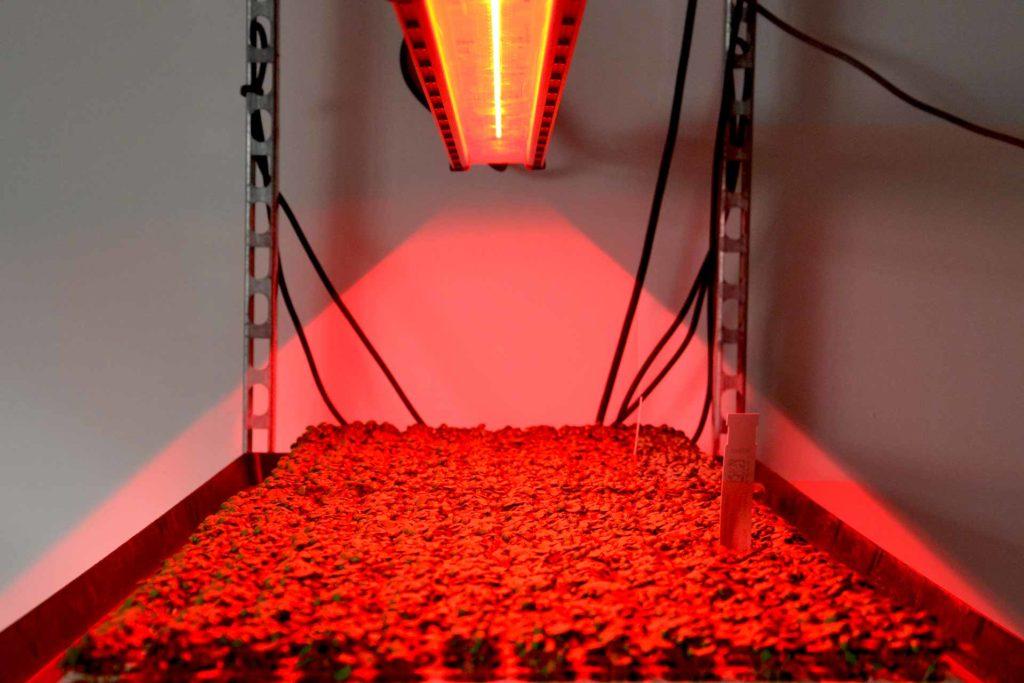 Chambre de culture VGD éclairage led rouge