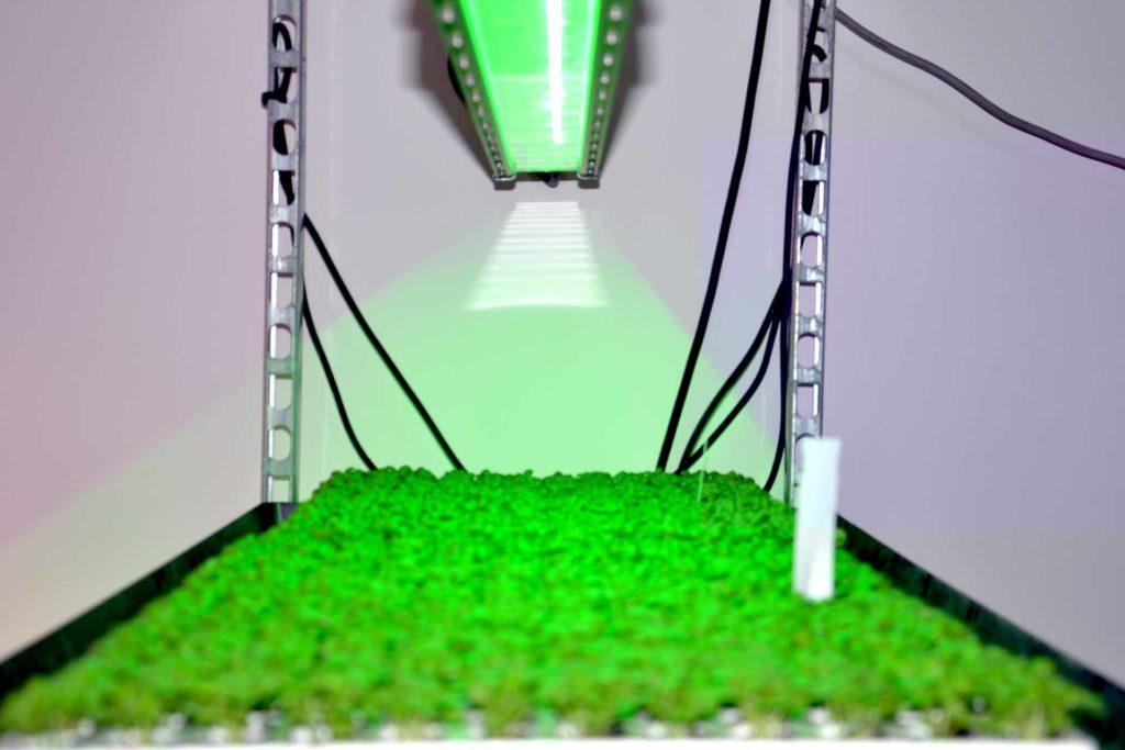 Chambre de culture VGD éclairage led vert