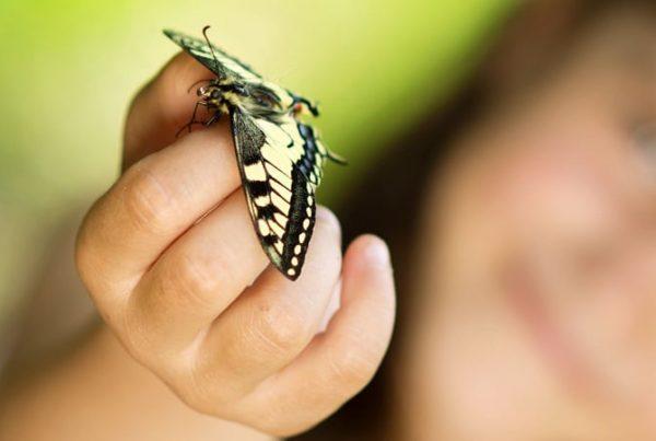 Papillon dans la main nutrition animale transformation proteine