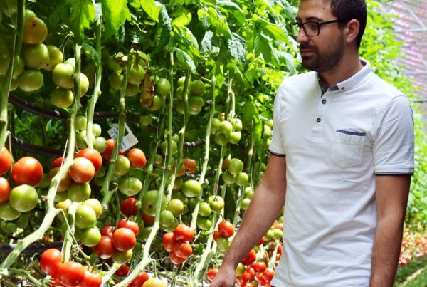 Serre tomates observation éclairage led vertical
