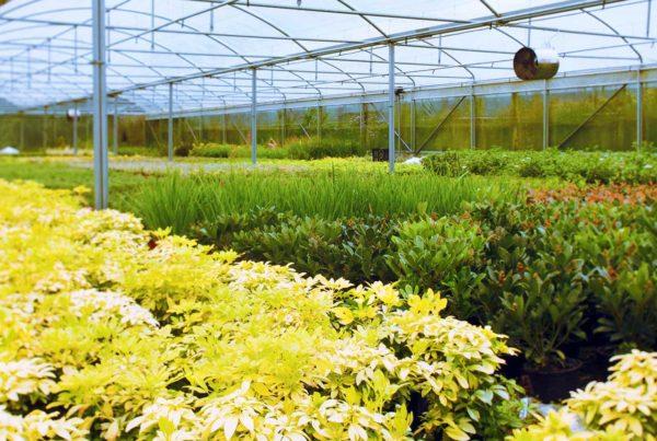 Plantes aromatiques et médicinales PPAM