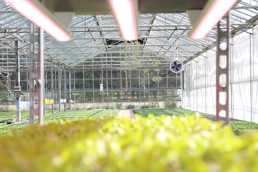 Eclairage Led racklight plantes à parfum
