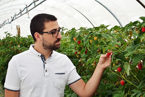 Nicolas Chauvin observation fraises serre tunnel