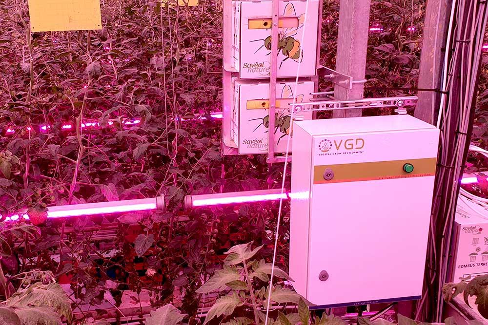 Boitier de pilotage VGD Box éclairage philips tomates serre verre