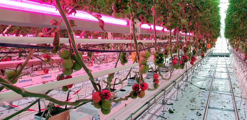 Essais éclairage led interligne 2x6 voies tomates serre verre CTIFL