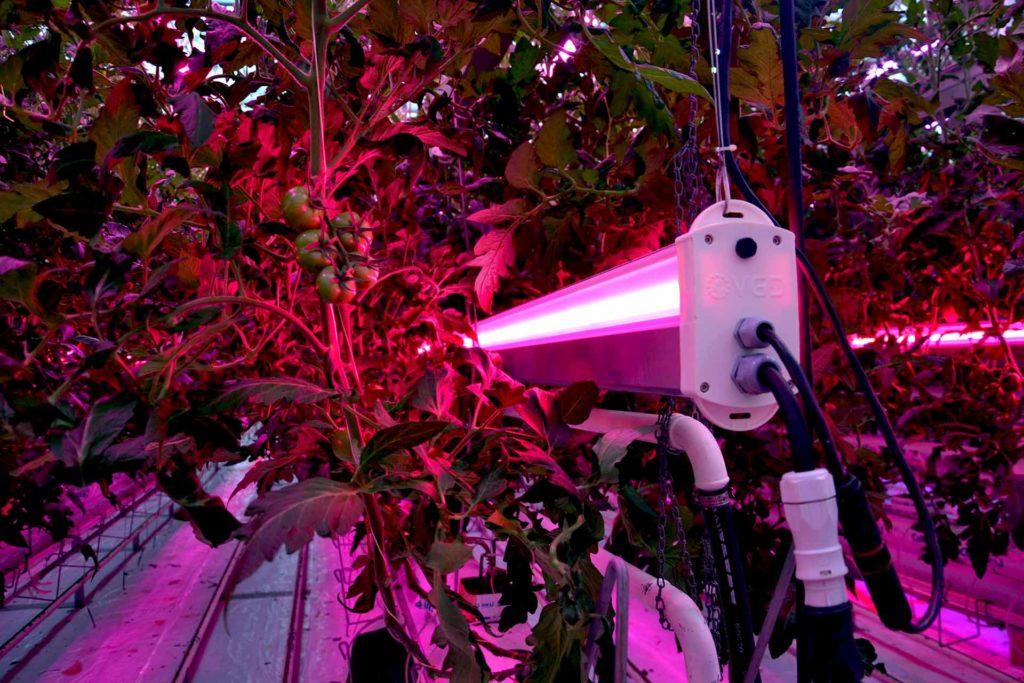 Eclairage led highrack 6 voies tomates serre verre CTIFL