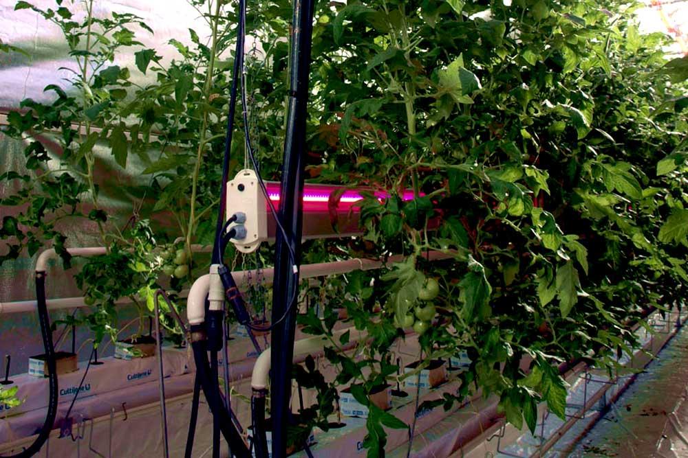 Essais éclairage led highrack 6 voies tomates serre verre CTIFL